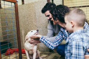 Best practices when adopting dogs.