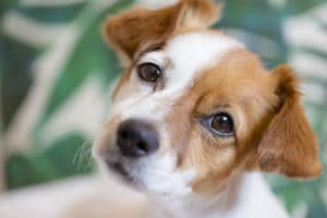 Adopting puppies from animal shelters