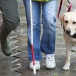 Service Dogs Part 3: Guide Dogs
