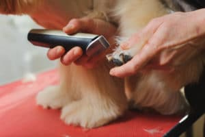 Importance of dog clippers
