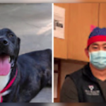 Animal Rescue Names Their Dogs After The Health Heroes And Essential Workers