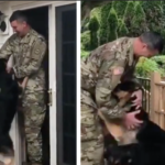 Dogs Squeal When Their Soldier Dad Returns Home After Being Gone For Weeks